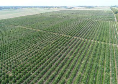 Продажа садового хозяйства 740 га в Винницкой области