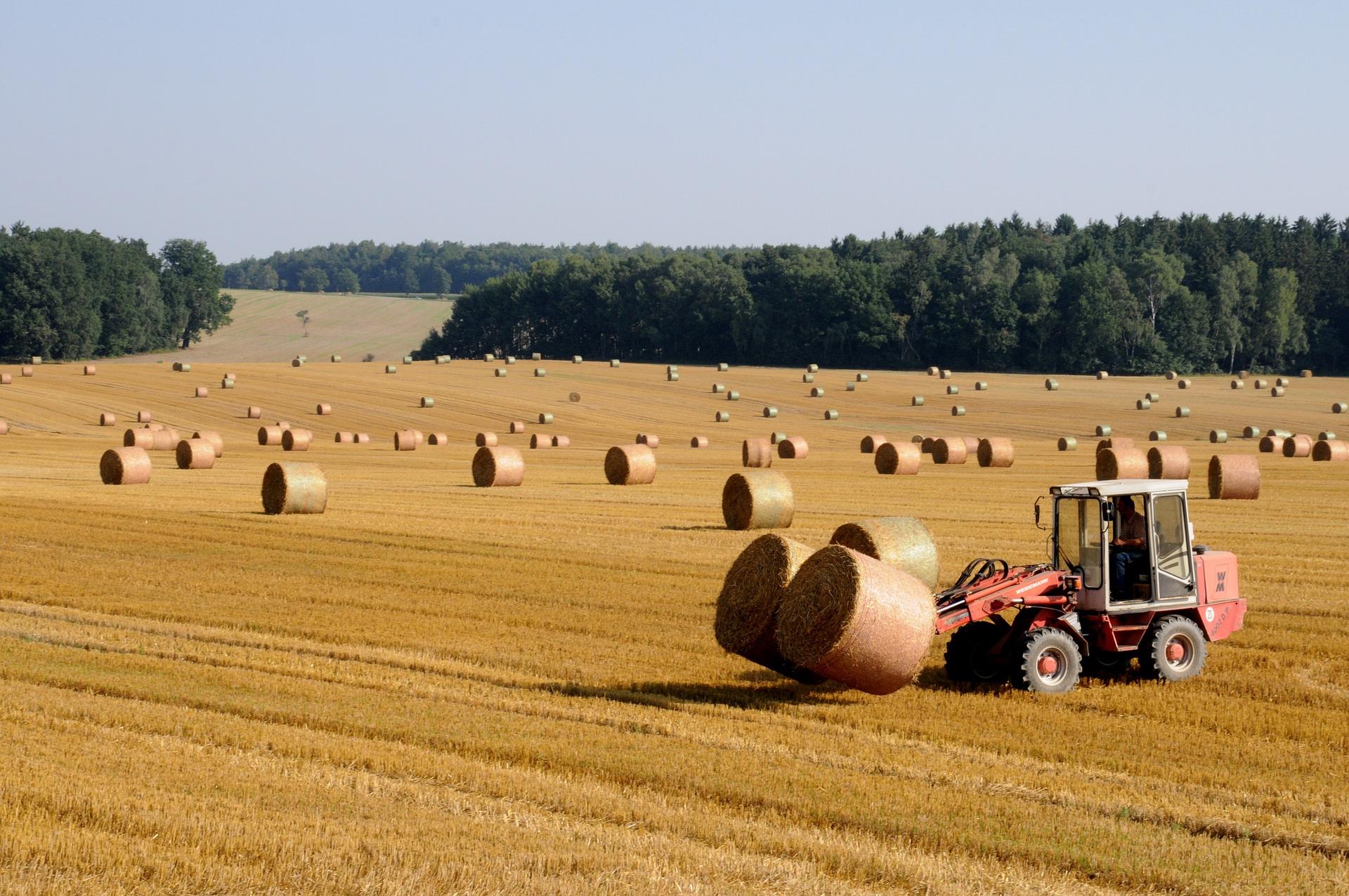 harvest-803479_1920