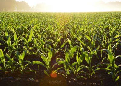 Sale of agricultural enterprise 643 hectares, Chernihiv region