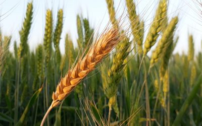 How will the grain price be formed in this year